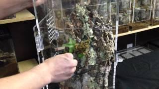 Arboreal Tarantula Enclosure Setup