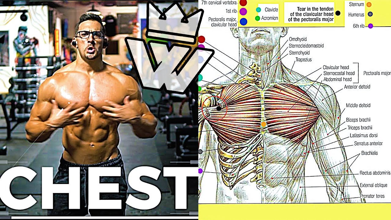 Full CHEST & ARMS Workout | 9 Effective Exercises