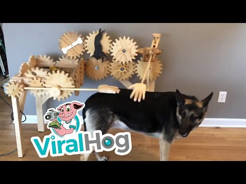 Automatic Dog Petter || ViralHog