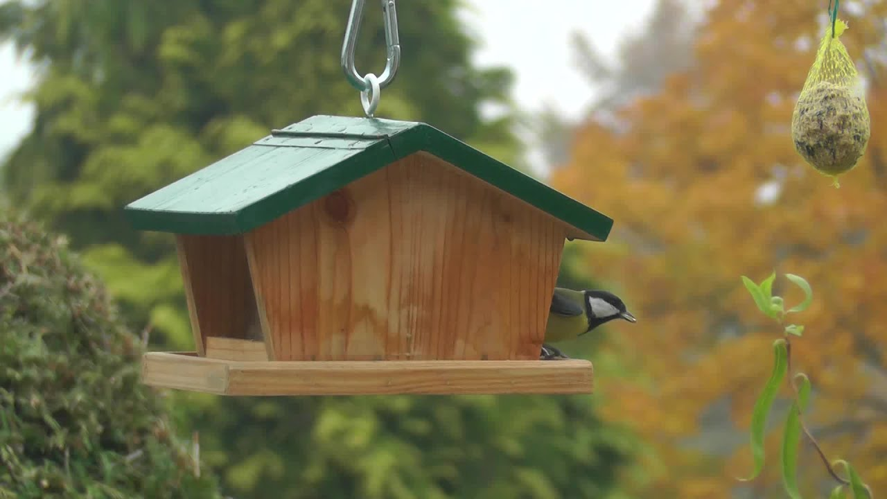 vogelfutterhaus bird feeder youtube. Black Bedroom Furniture Sets. Home Design Ideas