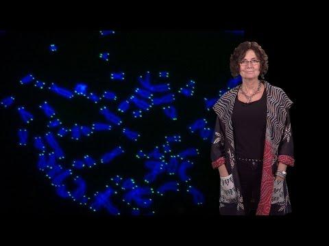 Titia de Lange (Rockefeller U.) 1: Telomeres and human disease