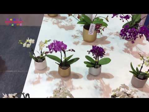 Orkide Çeşitleri ve Renkleri   Orchidaceae