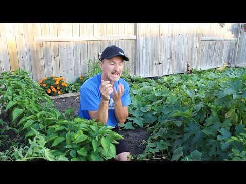 Gardening In Canada