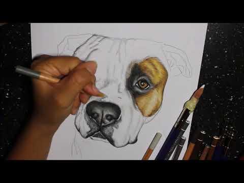 Amstaff - Pet Portrait | Ritratti a 4 Zampe