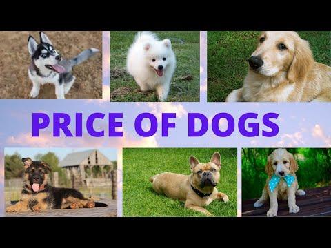 Price of Dogs in Nepal  के तपाईहरु कुकुर पाल्ने सोचमा हुनुहुन्छ ?