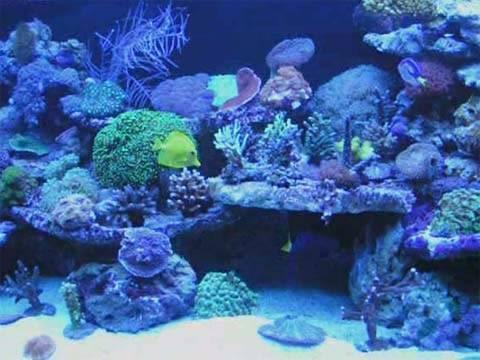 Nice reef tank riffaquarium zierfische aquarium 2009 for Zierfische aquarium