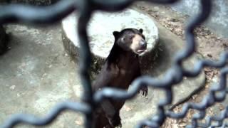 Малайский медведь в PhuketZoo