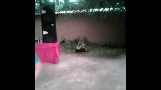 Собачьи кара жорго
