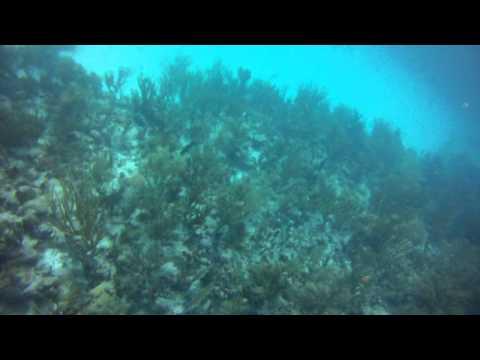 Diving Congo Cay USVI Part 2