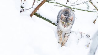 LIVE:  Happy Forest cats - TinyKittens.com thumbnail