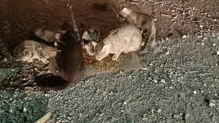 Feeding resident cats on the shipyard