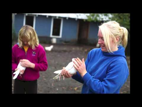 Raising Homing Pigeons in Roseburg