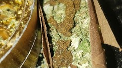 Arizona medical marijuana event