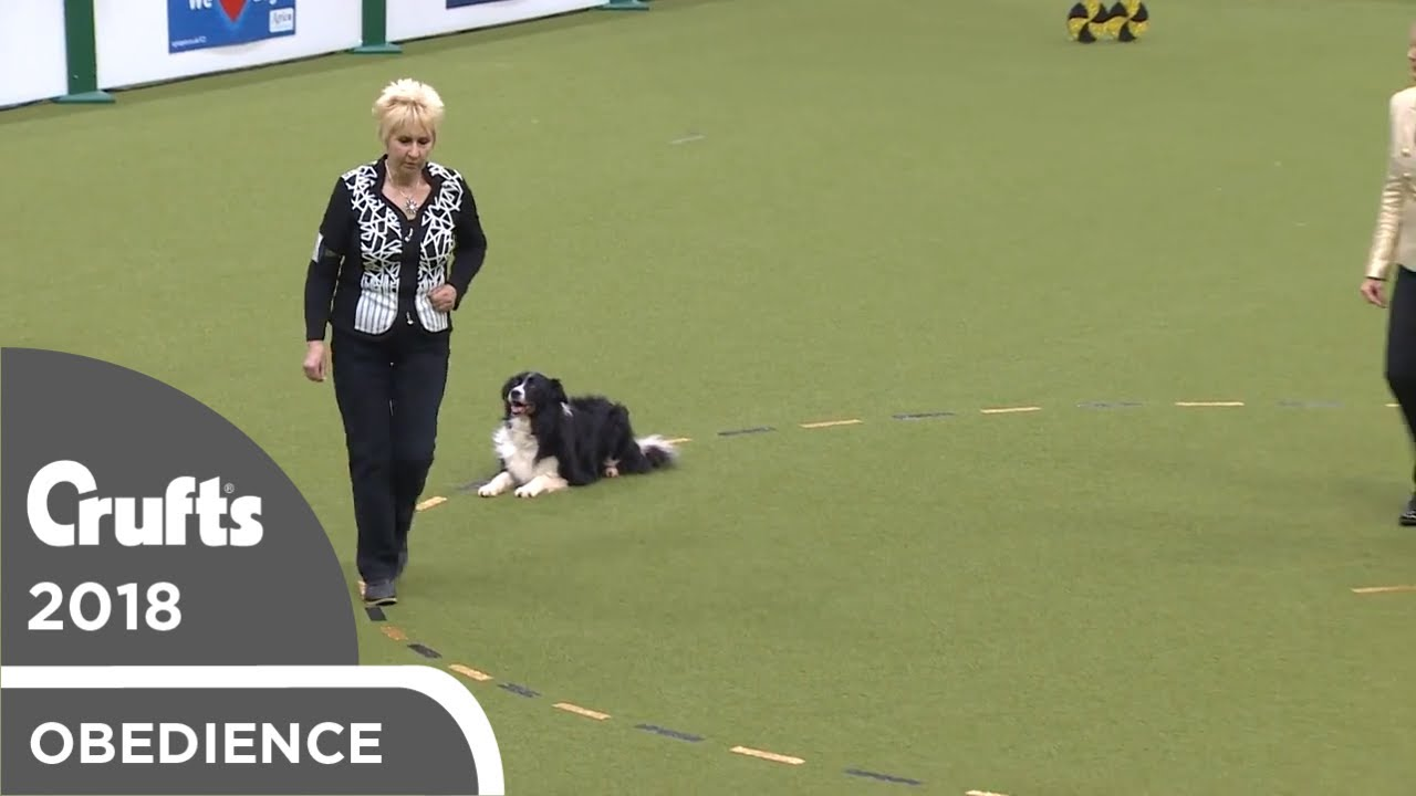 Obedience - Dog Championship - Part 7   Crufts 2018