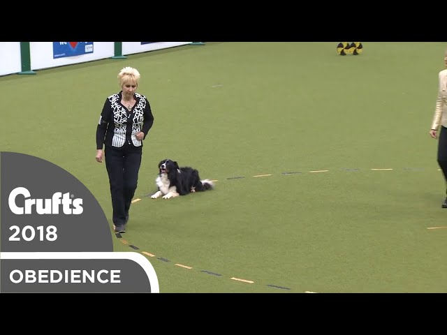 Obedience - Dog Championship - Part 7 | Crufts 2018
