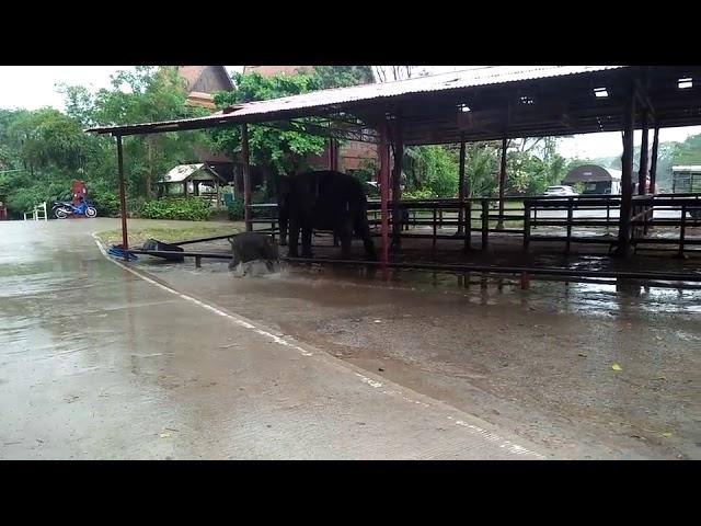 Бебе слонче обожава дожд