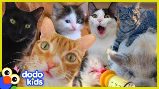 These Cats Did What?! | 30 Minutes Of Cat Stories | Dodo Kids