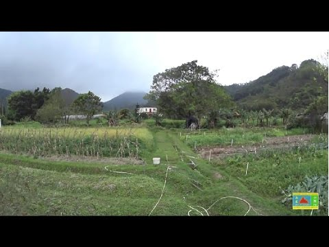 Hong Kong Organic Farms Trip 有機農莊遊 (1)