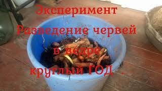 Эксперимент Разведение червей в ведре
