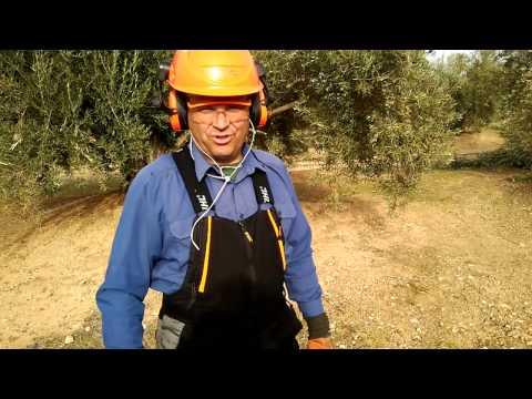 PODA OLIVO JAÉN ALCAUDETE VIDEO II