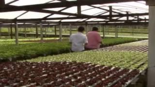 O Cultivo em Sistema de Hidroponia, em Rondônia | Parte 2