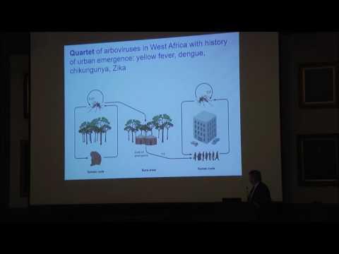 Zika Virus Lecture, Scott C. Weaver, 5/16/2016