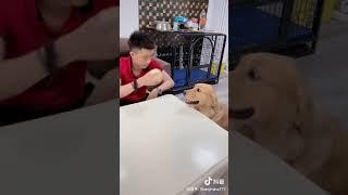 Funny Dog #Hit #Viral #Top #Animal