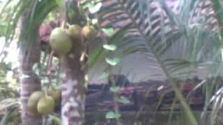 Moiloth Kandi (Tharavad)
