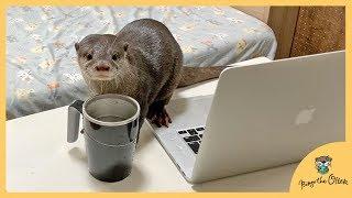 カワウソビンゴ絶対に倒れないコップでカワウソ対策!Otter Bingo challenging mighty mug