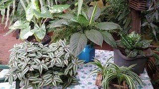 10 Plantas Que Não Precisam Do Sol