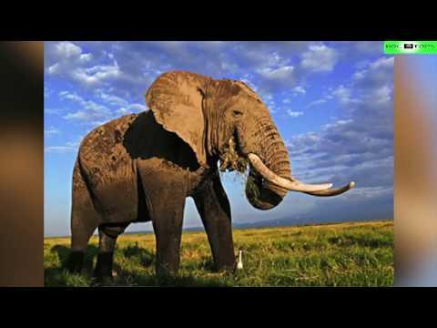 Top 10 Animales Más Grandes Del Mundo Y De La Historia ...