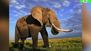 Top 10 Animales Más Grandes Del Mundo Y De La Historia
