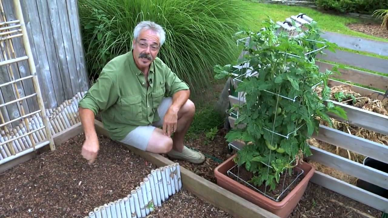 Paul James Ggtv What S Happening With My Vegetable Garden