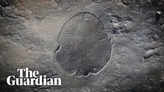 Scientists reveal secrets of oldest known animal fossil