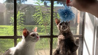 Arts & Crafts: National Cat Day Crafts