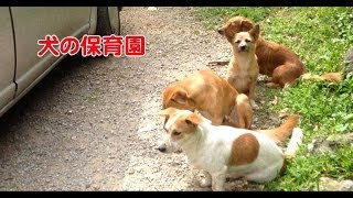 シリーズ 犬の保育園。私が出かける時は、何故かわかるお子ちゃまたち。...