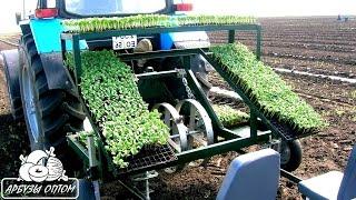 видео Правильно посадить арбузы под пленку