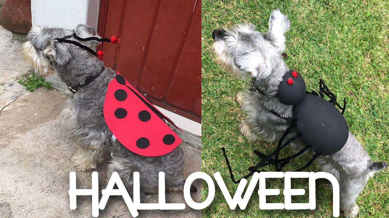 Diy Disfraces De Halloween Para Mascotas Annie Cusp
