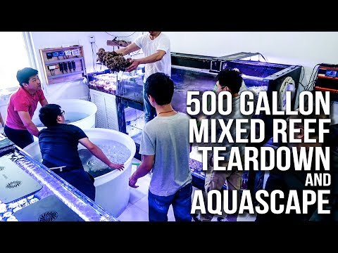 500 Gallon Reef tank Tear Down and Aquascape