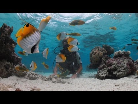 Cook Islands, Diving and Dining Experiences