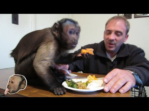 Monkey Thanksgiving Dinner