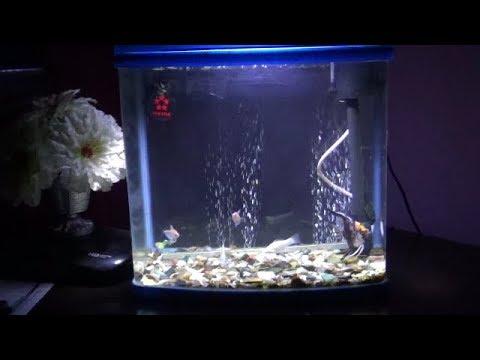 Diy Cheap Waterproof Led Lighting For Aquarium