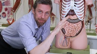 Anatomy of a lymph node