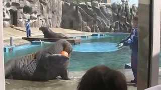В зоологическом парке Удмуртии 17 мая 2014 г. (г. Ижевск)