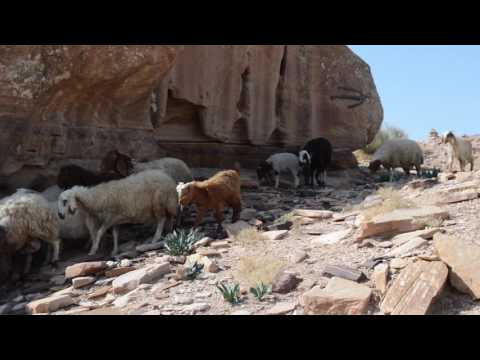 Travel Video - Hiking Madras Trail In Petra - Jordan