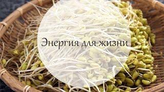 Энергичный салат из проростков