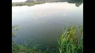 Рыбалка.Чечне белый Амур
