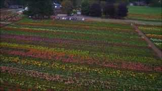 Aerial video of Swan Island Dahlias Farm in Canby Oregon