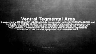 Medical vocabulary: What does Ventral Tegmental Area mean