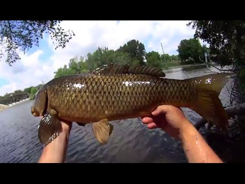 Surface carp fishing with white bread youtube for Fishing with bread